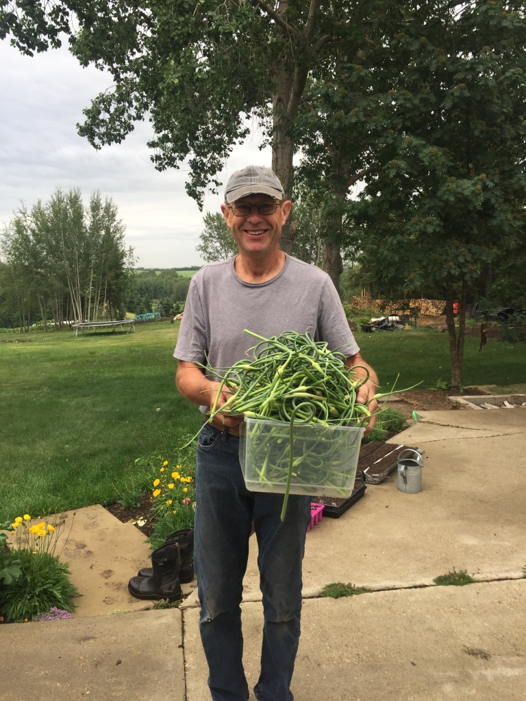 Hubby with tub of garlic scapes