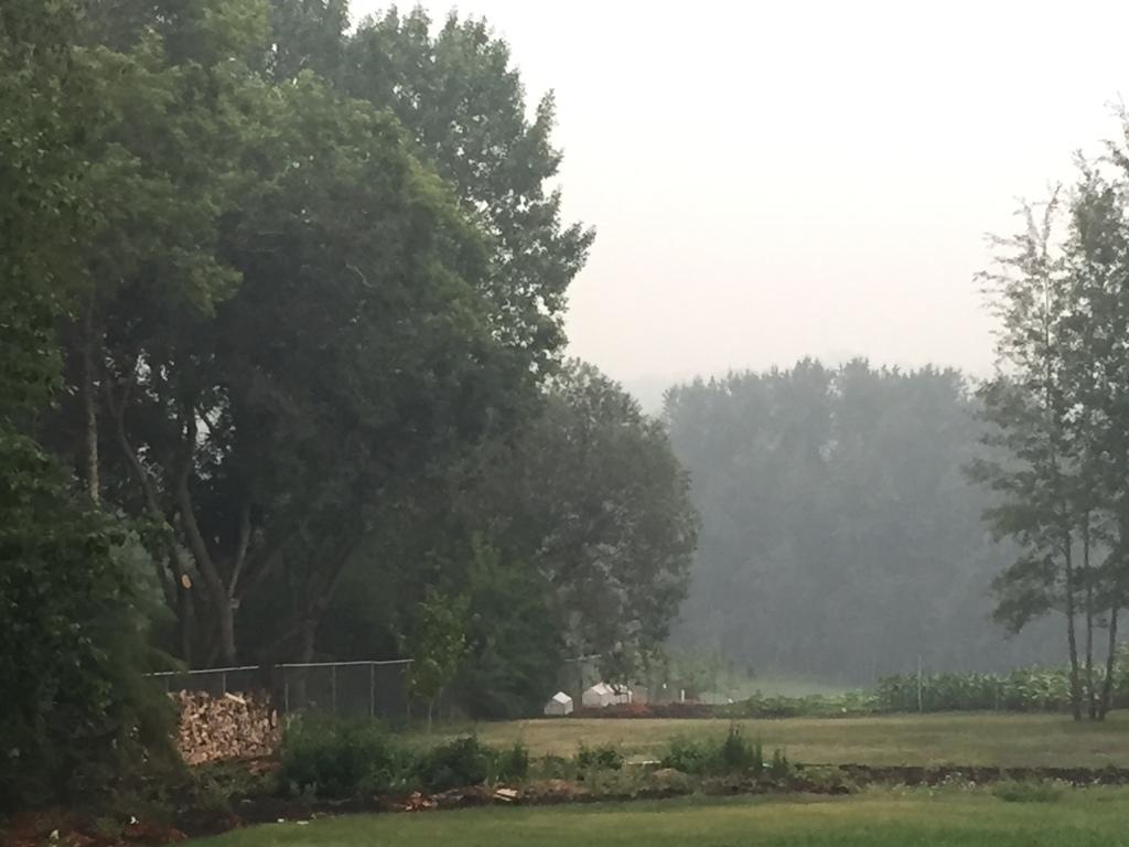 Smoky back yard view