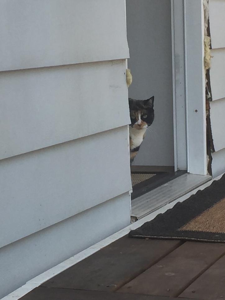Indy looking out deck door